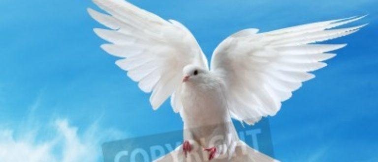 Article : L'oraison funèbre d'un griot (Chanson d'une colombe)